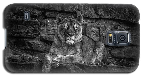 Keen Eyed Lioness Galaxy S5 Case