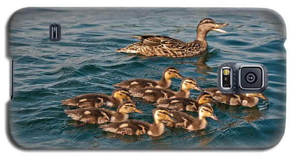 Galaxy S5 Case featuring the photograph Keeping Them All Inline by Brenda Jacobs