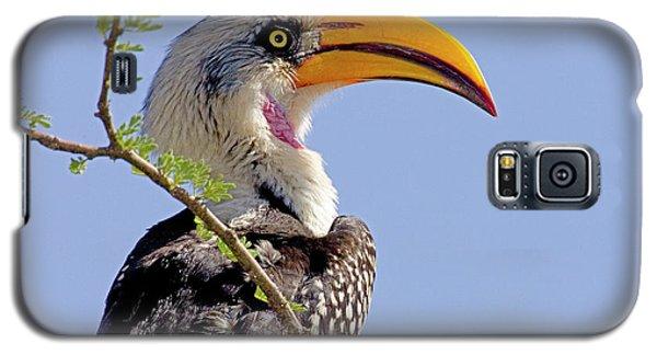 Kenya Profile Of Yellow-billed Hornbill Galaxy S5 Case