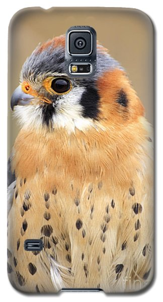 Kestral Galaxy S5 Case by Charline Xia
