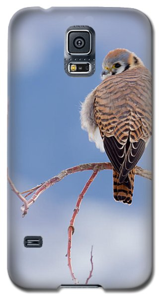 Kestrel In The Cold Galaxy S5 Case