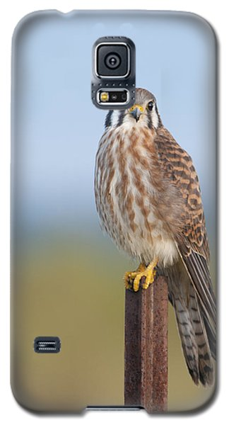 Kestrel On Metal Post Galaxy S5 Case