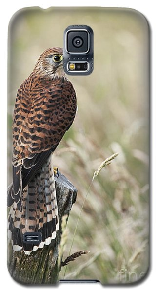 Kestrel Galaxy S5 Case