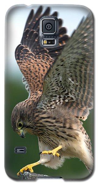 Kestrel's Performance Galaxy S5 Case
