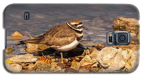 Kildeer On The Rocks Galaxy S5 Case by Robert Frederick