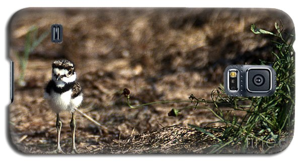 Killdeer Chick Galaxy S5 Case