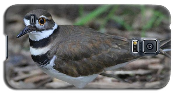 Killdeer Galaxy S5 Case by Dan Sproul