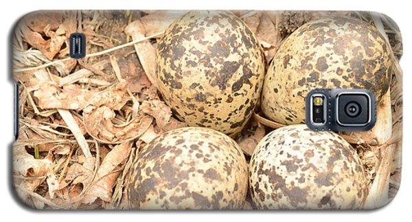 Killdeer Eggs Galaxy S5 Case