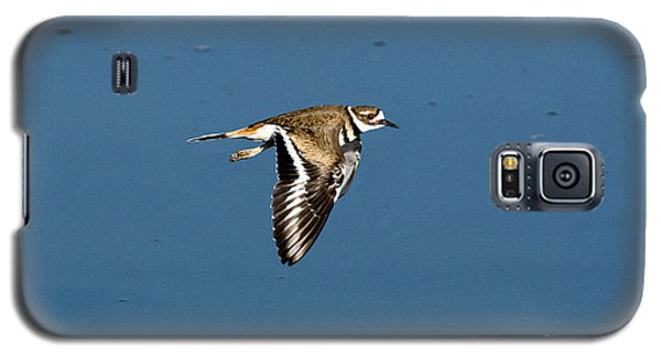 Killdeer In Flight Galaxy S5 Case by Anthony Mercieca