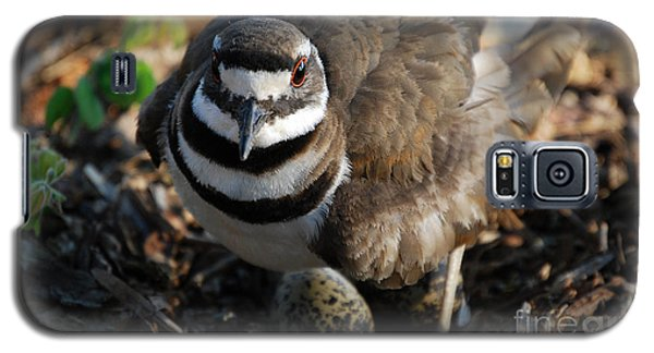 Killdeer Mom Galaxy S5 Case by Skip Willits