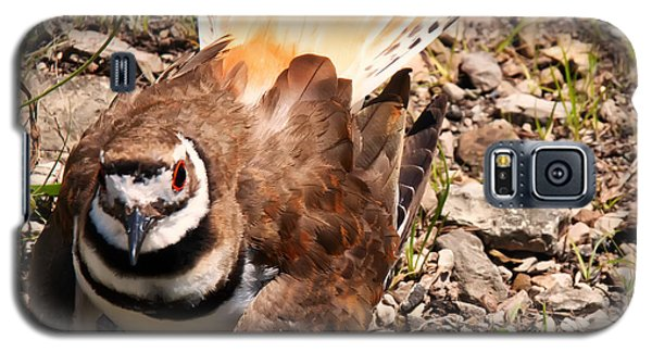 Killdeer On Its Nest Galaxy S5 Case by Chris Flees