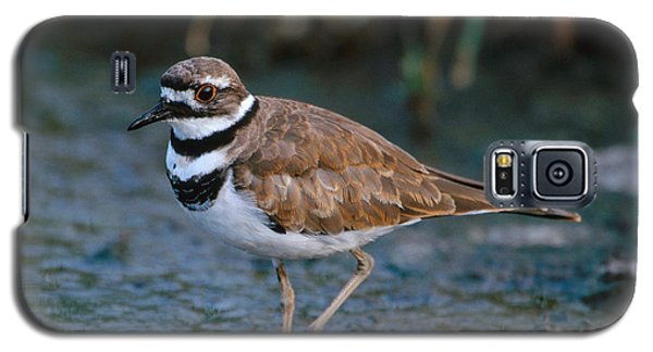 Killdeer Galaxy S5 Case by Paul J. Fusco