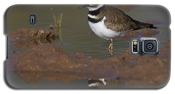 Galaxy S5 Case featuring the photograph Killdeer Reflection by Bryan Keil
