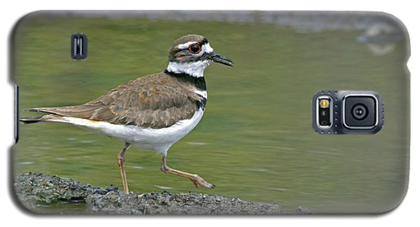 Killdeer Walking Galaxy S5 Case by Sharon Talson