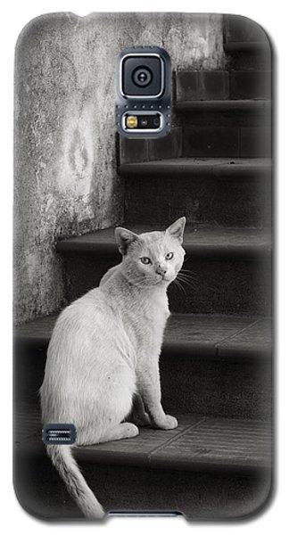 Kimba Galaxy S5 Case by Laura Melis