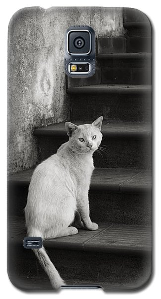 Galaxy S5 Case featuring the photograph Kimba by Laura Melis