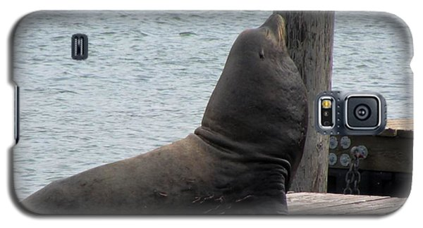 Galaxy S5 Case featuring the photograph King Of Pier 39 by Brenda Pressnall