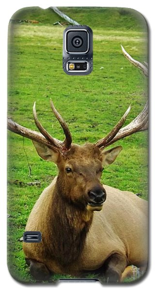 King Of The Herd Galaxy S5 Case