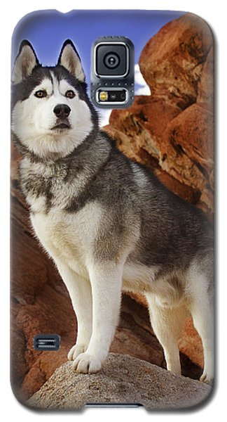 King Of The Huskies Galaxy S5 Case