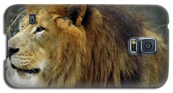 King Of The Jungle Galaxy S5 Case by Sara  Raber