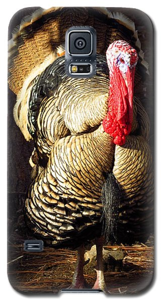 Galaxy S5 Case featuring the photograph King Of The Roost by Phyllis Beiser