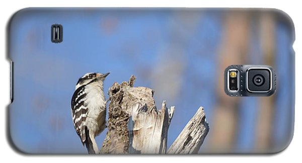 Galaxy S5 Case featuring the photograph King Of The Tree Top by Dacia Doroff