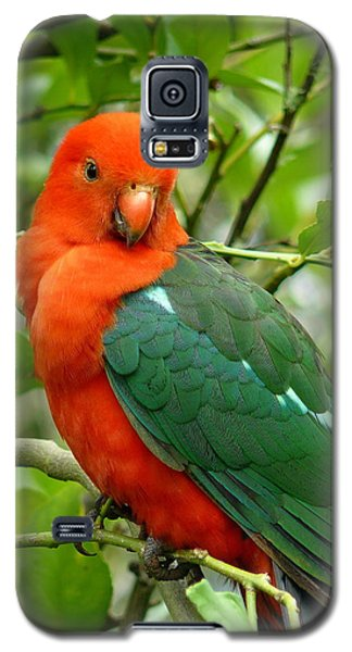 Galaxy S5 Case featuring the photograph King Parrot Male by Margaret Stockdale