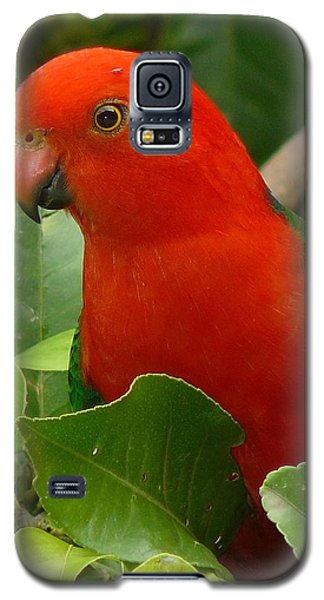 Galaxy S5 Case featuring the photograph King Parrot Portrait by Margaret Stockdale