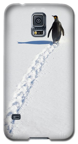 King Penguin And Tracks S Georgia Island Galaxy S5 Case by Yva Momatiuk and John Eastcott