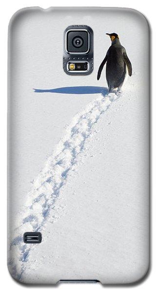 King Penguin And Tracks S Georgia Island Galaxy S5 Case by Yva Momatiuk and John Eastcott