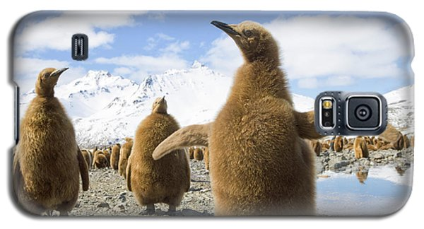 King Penguin Chicks South Georgia Island Galaxy S5 Case by Yva Momatiuk and John Eastcott