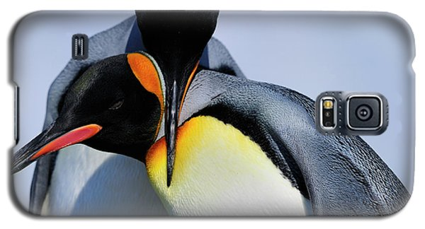 King Penguins Bonding Galaxy S5 Case