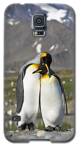 King Penguins Courting St Andrews Bay Galaxy S5 Case