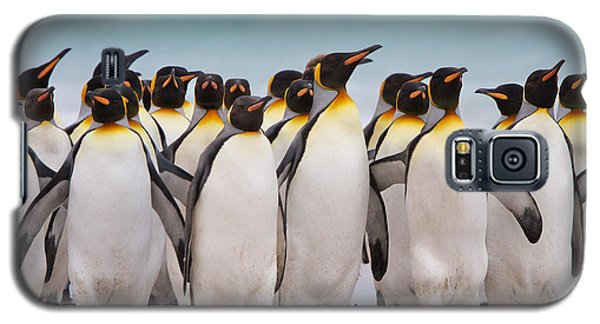 King Penguins Galaxy S5 Case