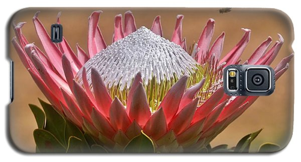 King Protea Galaxy S5 Case