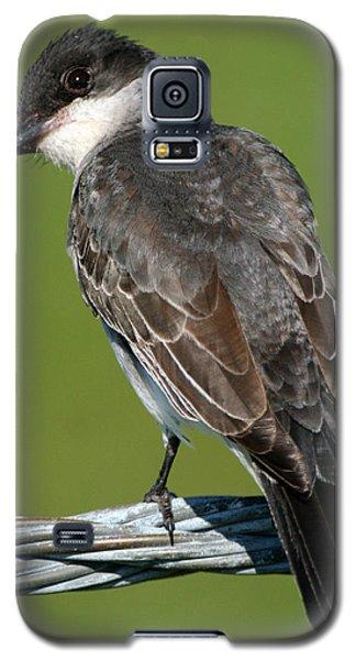 Kingbird On A Wire Galaxy S5 Case