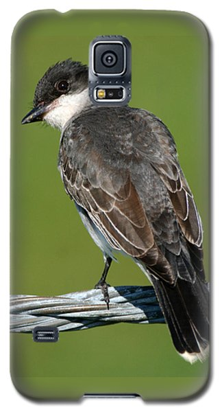 Kingbird On A Wire Galaxy S5 Case