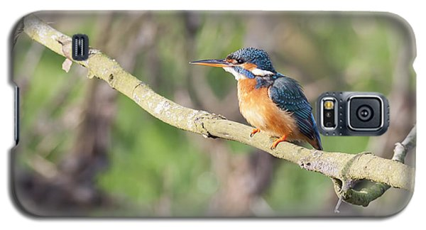 Kingfisher Galaxy S5 Case by Ian Merton