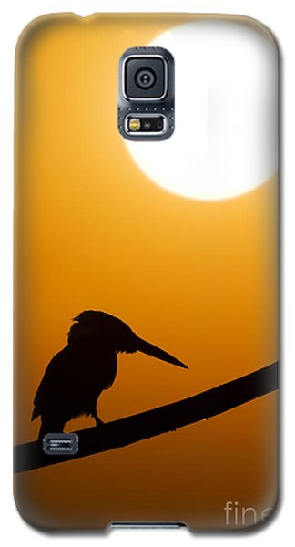 Kingfisher Sunset Silhouette Galaxy S5 Case by Tim Gainey