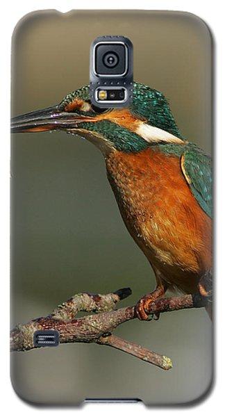 Kingfisher2 Galaxy S5 Case