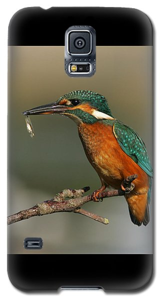 Kingfisher2 Galaxy S5 Case