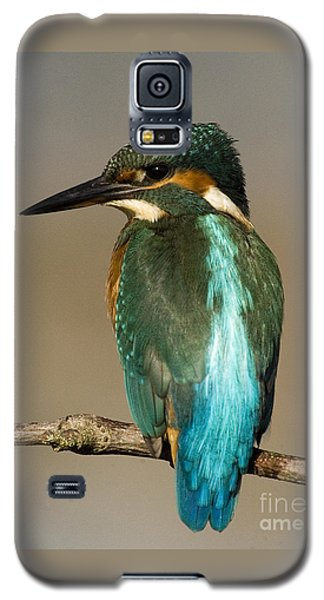 Kingfisher3 Galaxy S5 Case
