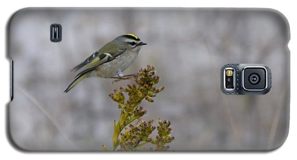 Galaxy S5 Case featuring the photograph Kinglet by Greg Graham
