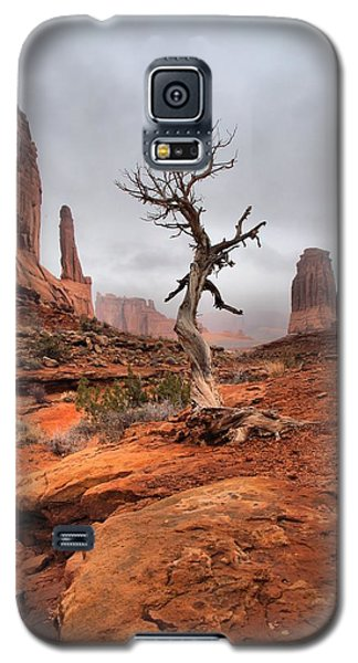 King's Tree Galaxy S5 Case by David Andersen