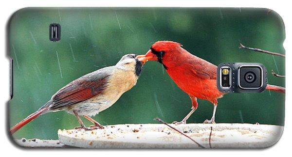 Galaxy S5 Case featuring the photograph Kissing Cardinals by John Freidenberg