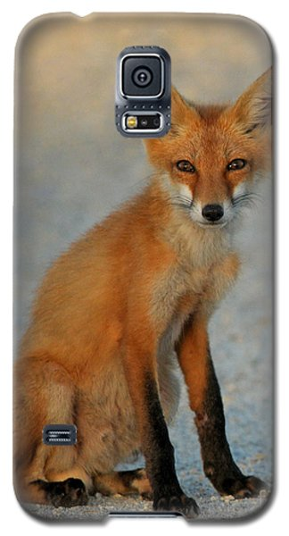 Galaxy S5 Case featuring the photograph Kit by Olivia Hardwicke