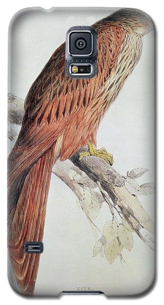 Audubon Galaxy S5 Case - Kite by Edward Lear