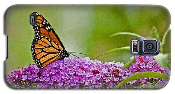 Kittatiny Monarch Galaxy S5 Case