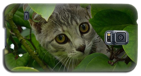 Kitten In The Bushes Galaxy S5 Case