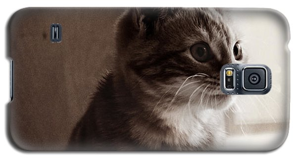 Galaxy S5 Case featuring the photograph Kitten In The Light by Melanie Lankford Photography